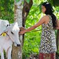 "Gallery: <a href=""/component/fwgallery/gallery/1-cows-for-cambodia"">Cows for Cambodia</a>"